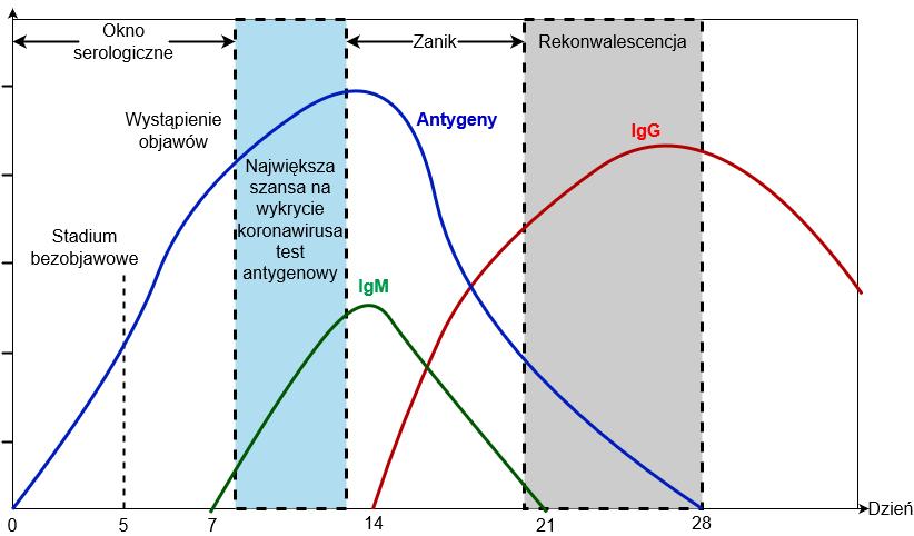 Różnica między przeciwciałami COVID-19 a antygenami SARS-Cov-2